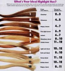 Levels Of Bleached Hair Hair Coloring
