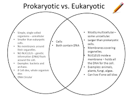 A Venn Diagram Of Prokaryotic And Eukaryotic Cells Single Cellular And Multicellular Venn Diagram 46 Wiring Diagram