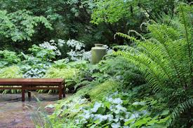 Small Picture Great Garden Combo 6 Beautiful Plants for a Shady Wet Site