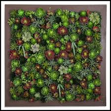 indoor artificial succulent walls click to enlarge on live succulent wall art with exotic indoor artificial succulent walls artificial plants unlimited
