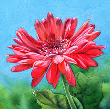 my love is like a red red daisy watercolor flower painting sold