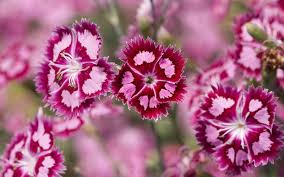 47 Free Wallpaper Pink Flowers On Wallpapersafari