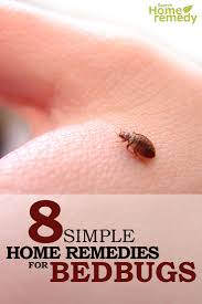 8 Home Remedies For Bed Bugs - Natural Treatments \u0026 Cure For Bed ...