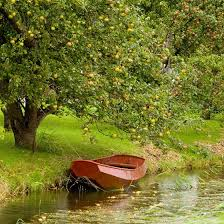 Image result for tree by the river