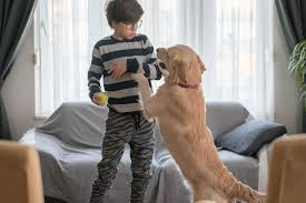 Huấn luyện chó không nhảy lên người