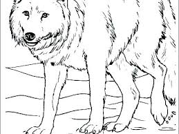 Wolf Coloring Pages To Print Wolf Coloring Pages To Print F Coloring