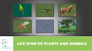 Life Span Of Plants And Animals