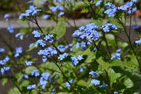 blue contrast cute flowers mevrouw s mylifewiths spring tiny 4k wallpaper and background