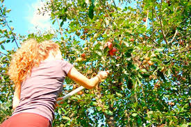 Learn How To Grow A Fig Tree  HGTVFruit Trees In Michigan