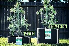 Nursery Container Sizes Chart Smart Pot Sizes Container Dimensions Plant Size Chart Links