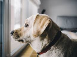stop dog scratching door by protecting with window