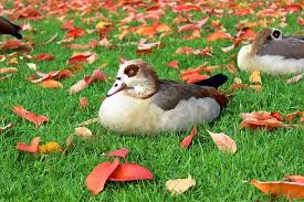best bird repellents for fall autumn