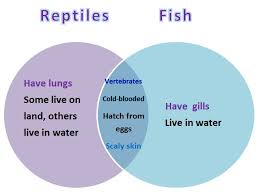 Difference Between Amphibians And Reptiles Venn Diagram Learning Ideas Grades K 8 Comparing Animals With Venn