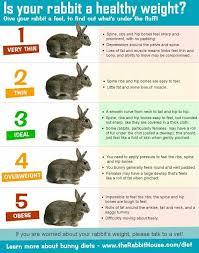 Bunny Weight Chart Bunny Care Rabbit Pet Rabbit