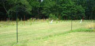 install a deer proof fence around