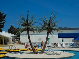 17 royal palms munil parks choose tropical expressions to provide shade for guests to relax