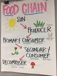 Chain Grade Chart Food Chain Anchor Chart Science Anchor Charts Fourth