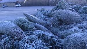 Indy Parks, Public Works offering 9 places to dispose of Christmas trees