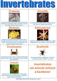 Animal Classification Chart Invertebrates Invertebrates Chart Biological Science Picture Directory