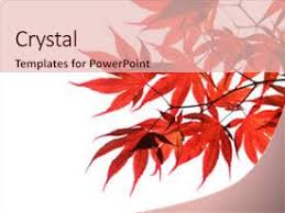 5000 Maple Leaf Powerpoint Templates W Maple Leaf Themed Backgrounds