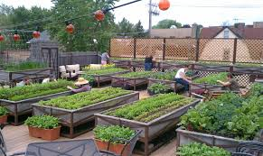 Rooftop Kitchen Garden The Nations First Certified Organic Rooftop Farm Atop The