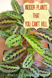 Indoor Plants That You Just Can't Kill