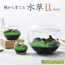 種 から 育てる 水草