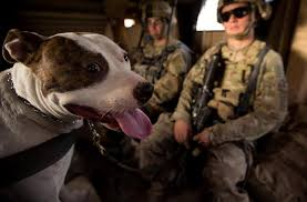yes a pit bull military working dog his is howard and he s  two page essay on respect in the military ib extended essay assessment criteria 2015 quizlet noah i just realized how bad i am in using the