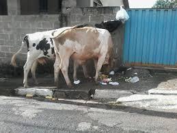 Resultado de imagem para foto de lixo em Carnaubais