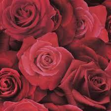 Red Flower Wallpaper Floral And Trail Wallpaper Flower Wallpaper