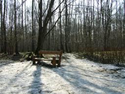 Сочинение на тему Весна в лесу  весна в лесу