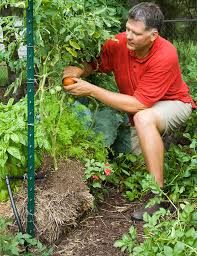garden hack growing in straw bales