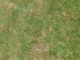 grass texture hd. Simple Texture Grass Texture And Grass Texture Hd X