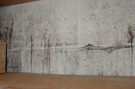 black mold in basement wall mold
