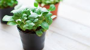 house plants. 7 Pretty Houseplants To Brighten Up Your Home House Plants