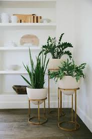Plant Interior Design Custom Design Inspiration