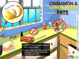 natural ant for kitchen how to get rid of ants non toxic outdoors