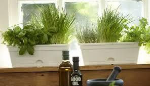 hydroponic herb garden. Indoor Hydroponic Herb Garden Kit Gardening Guide Y