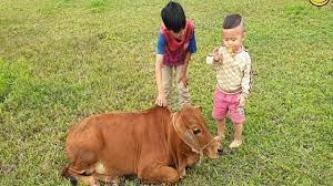 con bò - bé đi chăn bò - nhạc con bò - con bò ăn cỏ - nhạc thiếu nhi 2021 -  YouTube