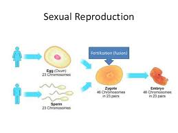 Venn Diagram Of Asexual And Sexual Reproduction Asexual Vs Sexual Reproduction