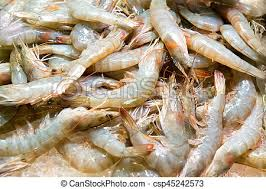 uncooked shrimp. Delighful Uncooked Pile Of Fresh Uncooked Prawns  Csp45242573 Throughout Uncooked Shrimp