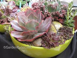 Small Picture Succulent Dish Garden The Gardens