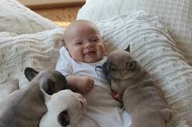 cute baby bulldog. Perfect Cute These Collection Of Photos Austin And His Pintsized Canine Pals Are  Sure To Brighten Anyoneu0027s Day They Have Already Been Embraced By A Worldwide  With Cute Baby Bulldog