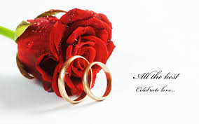 nice red roses with rings hd free wallpapers