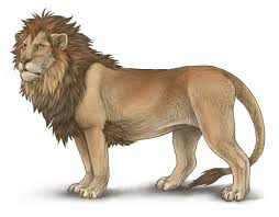 lion drawing color. Perfect Lion Realistic Lion Drawing With Color  Photo22 On Lion Drawing Color R