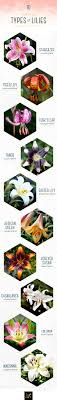 Flower Species Chart Types Of Lilies A Visual Guide Ftd Com