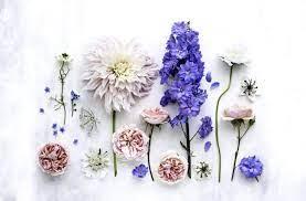 Conversation - Desktop Wallpaper Flower ...