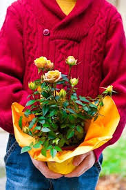 ideas for potted plant gifts giving potted plants as gifts