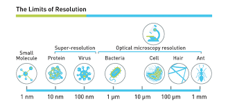 Microscope Magnification Chart What Magnification Do I Need To See Bacteria Westlab