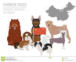 Kinds Of Dogs Chart Dogs By Country Of Origin Chinese Dog Breeds Infographic